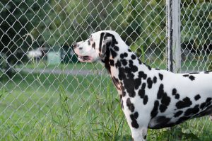Chain Link Fence San Marcos TX